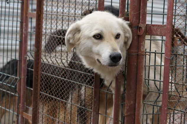 Почему власти затягивают с новыми правилами обращения с бездомными животными