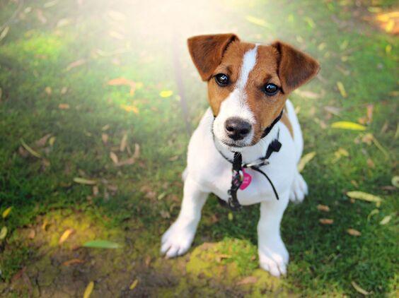 Россиянка отсудила у соседей компенсацию за собачий лай