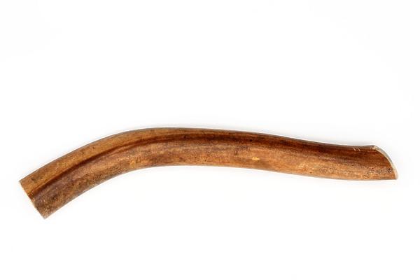 Рог северного оленя